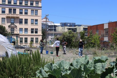 People planting in an urban garden