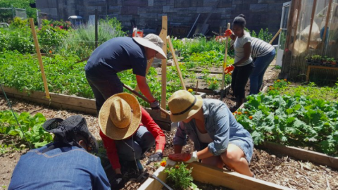 Image of people planting in a garden